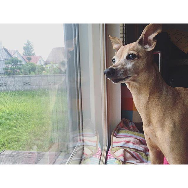 台風待ち中の犬