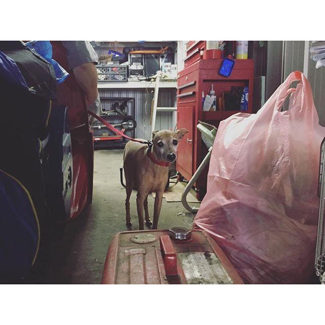 車庫掃除中のブ〜と犬