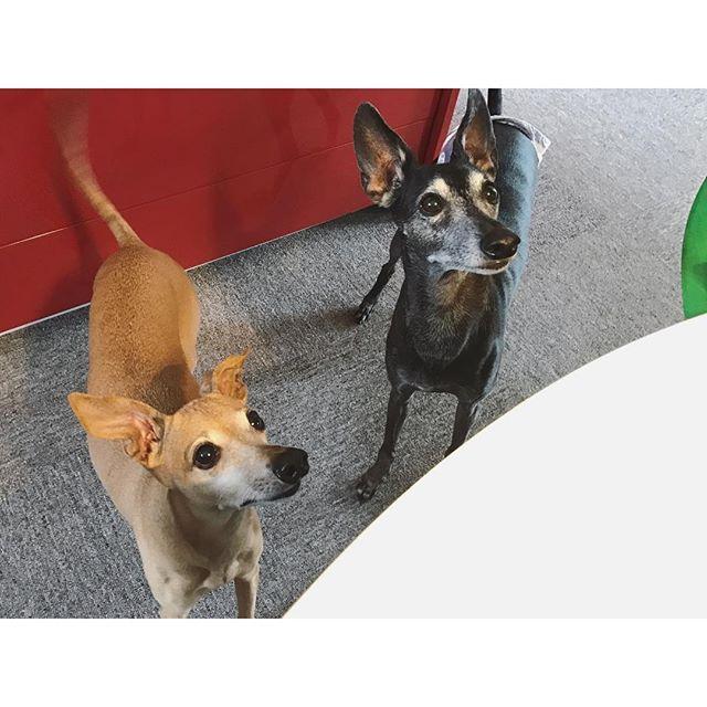 稲荷寿司を狙う犬達