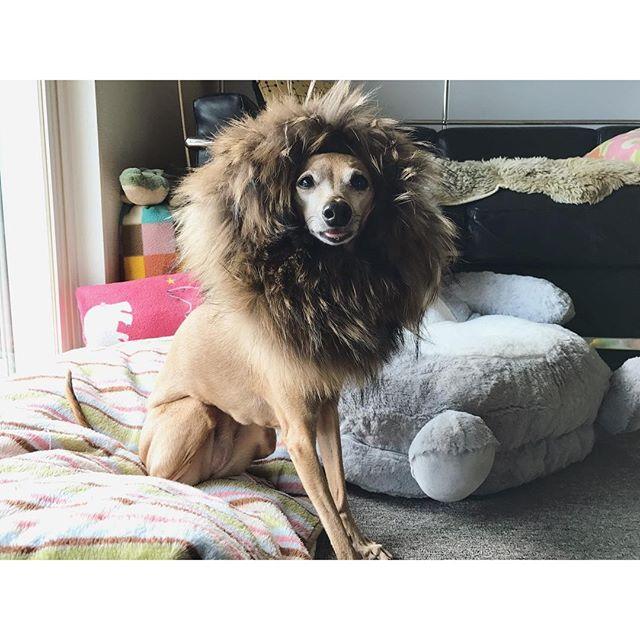 百獣の王ディノ子