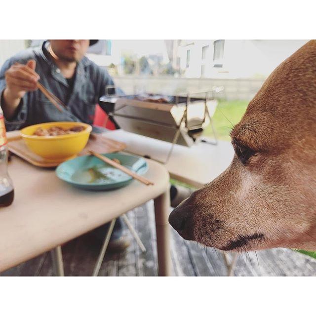 庭ジンギスカンを味わえず、見てるだけの犬