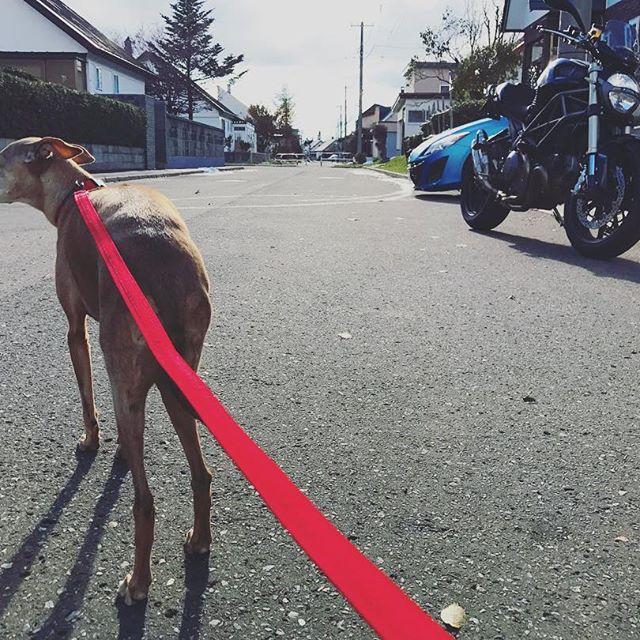 本日ポカポカ陽気。春まで乗れないと思ってたバイクに乗れたブ〜と脅える犬