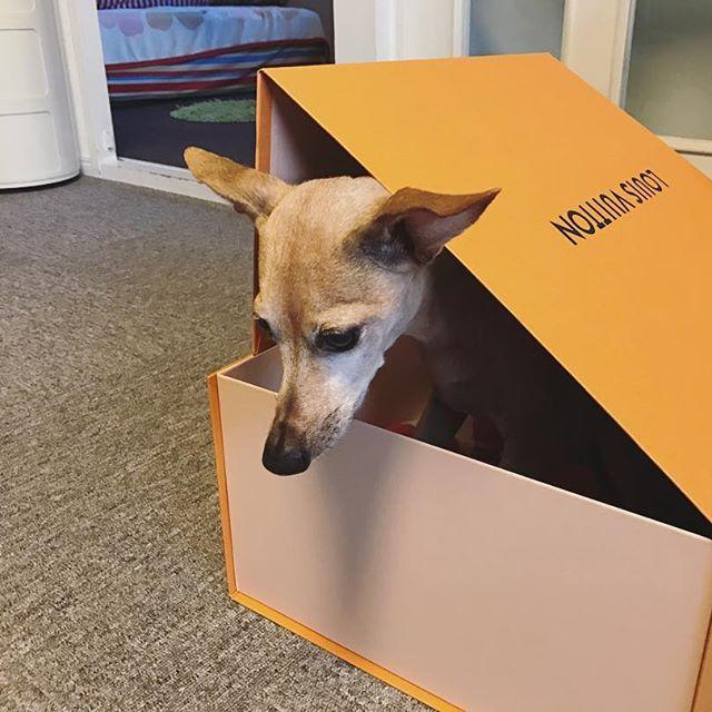 袋や箱に入れられ、憂鬱な犬