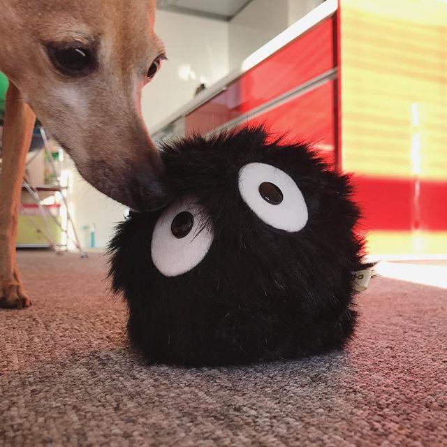 マックロクロスケを買って貰った犬
