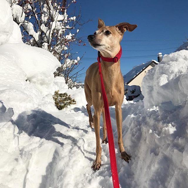 落雪を見てる犬