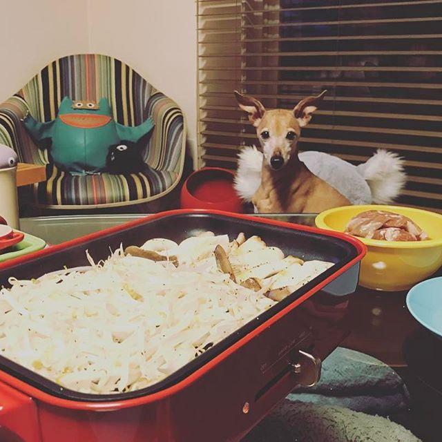 一緒にジンギスカンを食べる気の犬