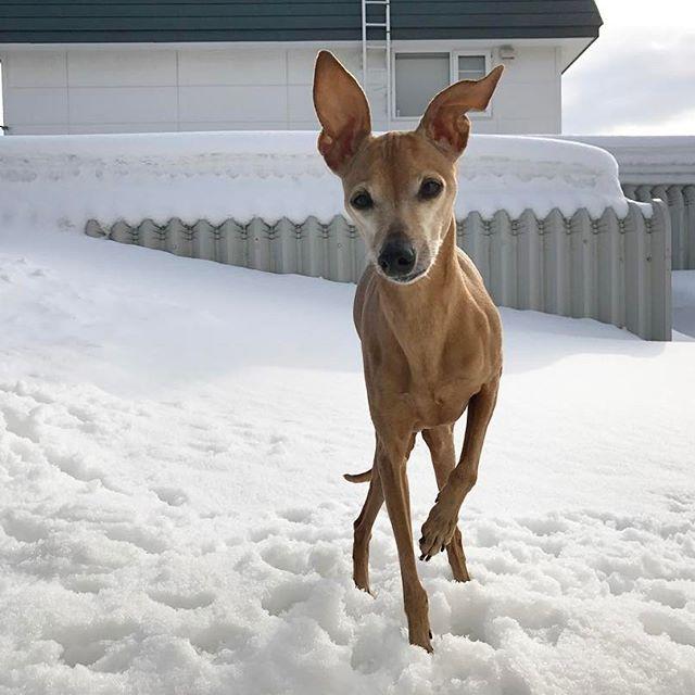 飼い主は小春気分だが、ディノ子は寒いらしい