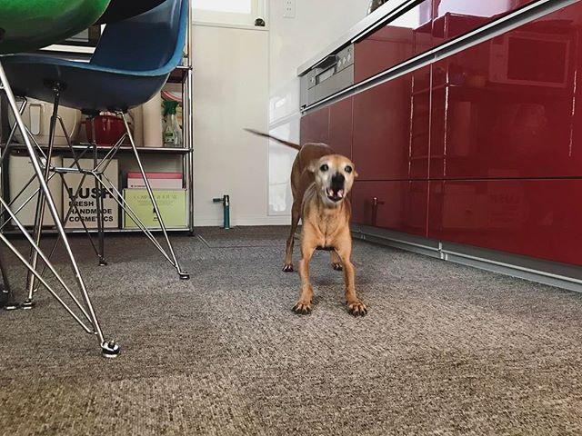 大騒ぎ中の腹ペコ犬