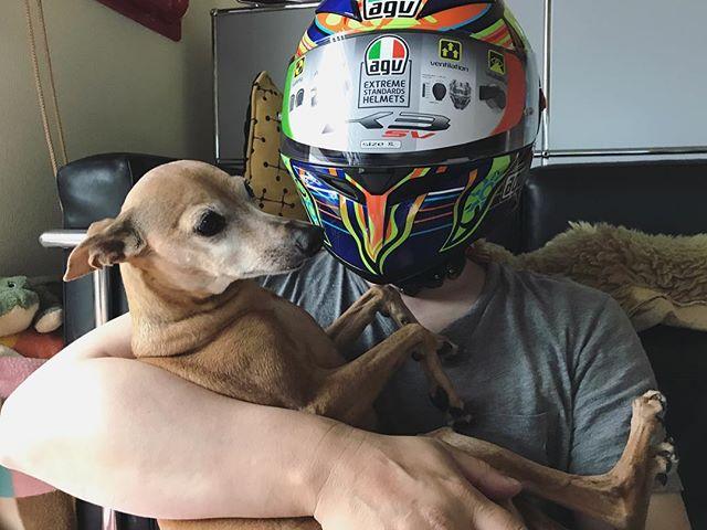 ヘルメットブ〜と犬