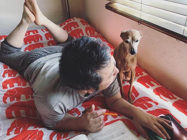 ブ〜の勉強を見てあげてる犬