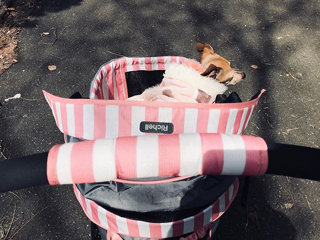 コレに乗って散歩に行くのが楽しいらしい腹巻犬。勝手にコレに乗ろうとし、失敗し、足流血。