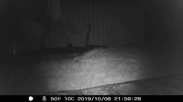 イタチ観察用に暗視カメラ購入