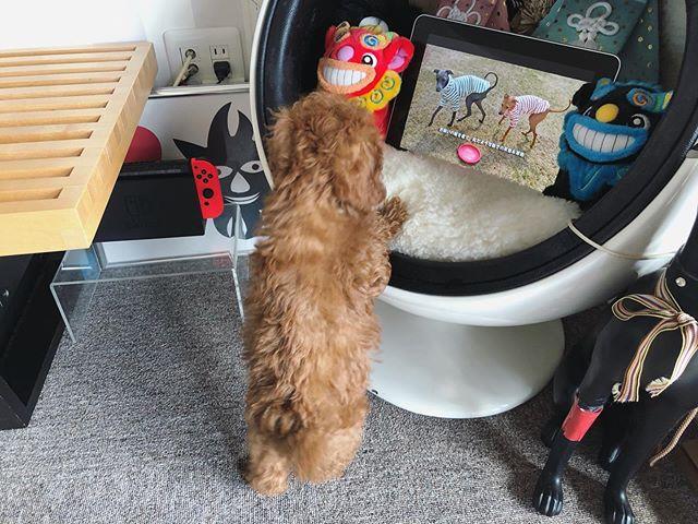 何かを狙っている犬