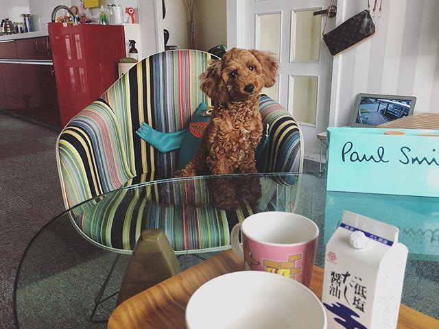 飼い主の朝食が気になるドヴィ子
