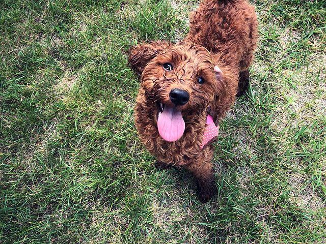 畑爆走で泥んこルンルン犬
