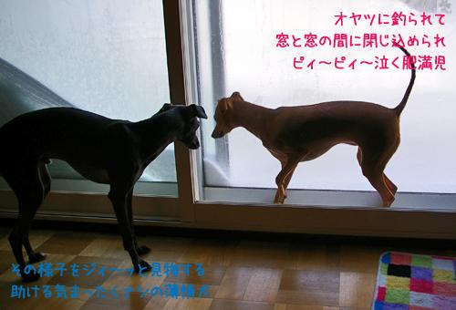 肥満児と薄情犬