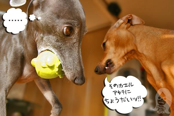 xxxbooth イタグレ★ジュリア&ディーノ